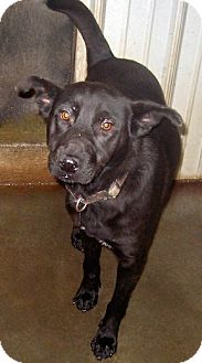 Shepherd (Unknown Type) Mix Dog for adoption in Tahlequah, Oklahoma - Viva
