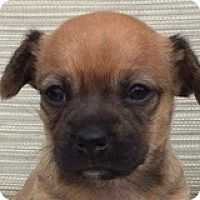 Adopt A Pet :: Clarke Campbell - Houston, TX