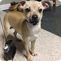 Adopt A Pet :: Ruby - Pompton Lakes, NJ