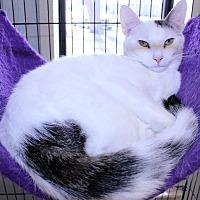 Adopt A Pet :: Barney - Lumberton, NC