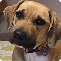 Adopt A Pet :: Bonnie - West Hartford, CT