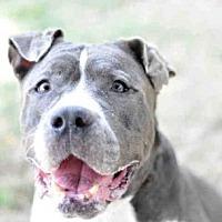 Adopt A Pet :: RIO - Tavares, FL