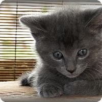 Adopt A Pet :: Whisper - Somerset, KY