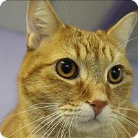 Adopt A Pet :: Simba - Abbotsford, BC