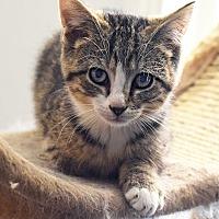 Adopt A Pet :: Aladdin - Baltimore, MD