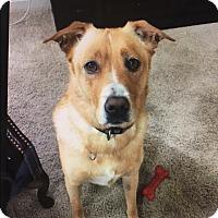Adopt A Pet :: Dash - Strongsville, OH