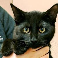 Adopt A Pet :: Quartzite - Memphis, TN