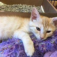 Adopt A Pet :: Pixel - Homewood, AL