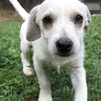 Adopt A Pet :: Tiny Tanner is reduced! - Washington, DC