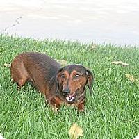 Adopt A Pet :: Razz - Garden Grove, CA