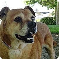 Adopt A Pet :: Denny - Poway, CA
