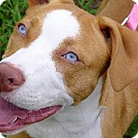 Adopt A Pet :: Skye the Blue-Eyed Puppy - Ocala, FL
