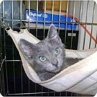 Adopt A Pet :: Flash - Mission, BC