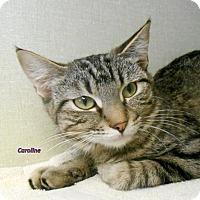 Adopt A Pet :: Caroline - Oskaloosa, IA