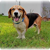 Adopt A Pet :: Rowdy - Southern Pines, NC