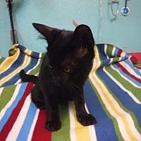 Adopt A Pet :: Almond Joy - Batesville, AR