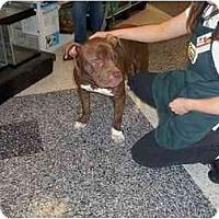 Adopt A Pet :: Auggie - Bakersfield, CA