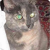 Adopt A Pet :: Fifi - Chesapeake, VA