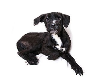 Terrier (Unknown Type, Medium) Mix Puppy for adoption in Wilmington, Delaware - Noel