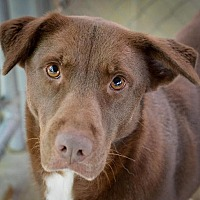 Adopt A Pet :: Honeybee - Hilton Head, SC