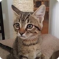 Adopt A Pet :: Ginny - San Fernando Valley, CA