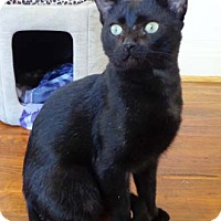 Adopt A Pet :: Othello - Merrifield, VA
