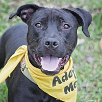 Adopt A Pet :: Bobo - Houston, TX
