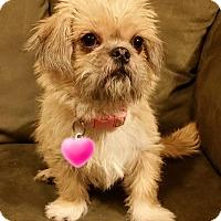 Adopt A Pet :: Iris Turner - Urbana, OH
