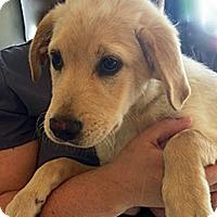 Adopt A Pet :: Peppie - BIRMINGHAM, AL