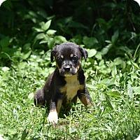 Adopt A Pet :: GREER - South Dennis, MA