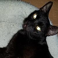 Adopt A Pet :: Henrietta - Tampa, FL