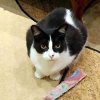Adopt A Pet :: MEMPHIS - THORNHILL, ON