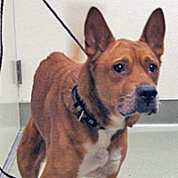 Adopt A Pet :: Nina - Wildomar, CA