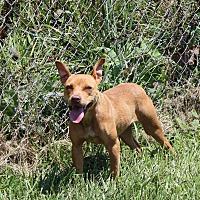 Adopt A Pet :: Lanie - Burlington, NJ