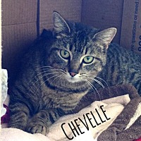Adopt A Pet :: Chevelle - Hartford City, IN