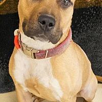 Adopt A Pet :: Anna - Wauwatosa, WI