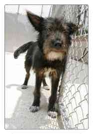 Terrier (Unknown Type, Medium) Mix Puppy for adoption in North Charleston, South Carolina - Chip