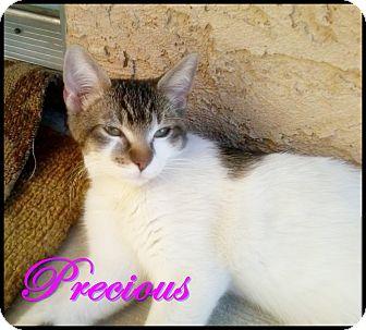 Domestic Shorthair Cat for adoption in Palm desert, California - Precious