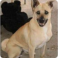 Adopt A Pet :: Yuko - Gilbert, AZ