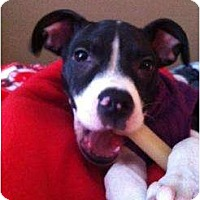 Adopt A Pet :: Vera - Rochester, NY