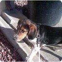 Adopt A Pet :: Polly - Alliance, NE