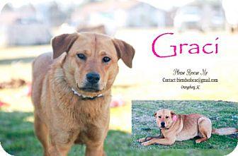 Golden Retriever Mix Puppy for adoption in Orangeburg, South Carolina - Graci - Urgent 3/2