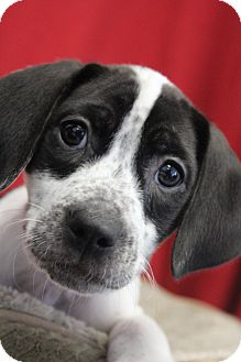 Hound (Unknown Type) Mix Puppy for adoption in Waldorf, Maryland - Desiree