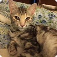 Adopt A Pet :: Carlotta - Delmont, PA
