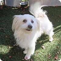 Adopt A Pet :: Fritz - Surrey, BC