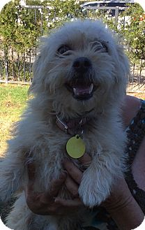 Terrier (Unknown Type, Small) Mix Dog for adoption in Simi Valley, California - Sebastian