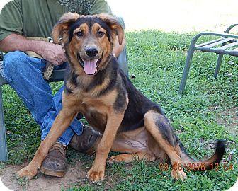 German Shepherd Dog/Shepherd (Unknown Type) Mix Dog for adoption in West Sand Lake, New York - Stardust(70 lb) Big Sweetie!