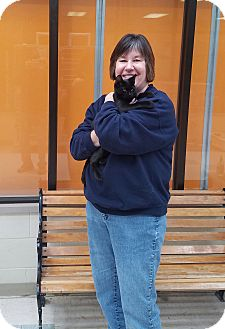 Domestic Shorthair Kitten for adoption in Elyria, Ohio - Bella