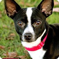 Adopt A Pet :: Papas - Marina del Rey, CA
