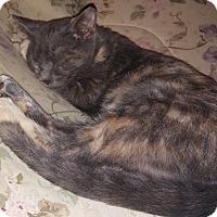 Adopt A Pet :: Jezebel - Farmington, AR